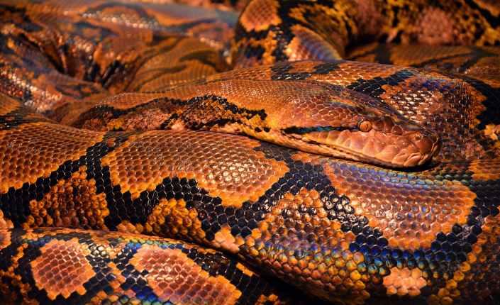 reptile snake snape